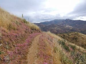 Trail through the wildflowers...