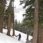 Skinning up among the big trees