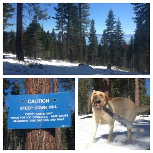 dog friendly cross country trails tahoe