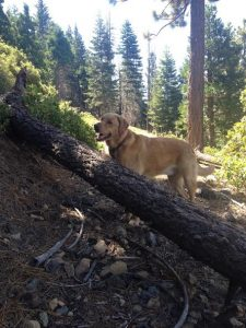 dogs-allowed-desolation-wilderness