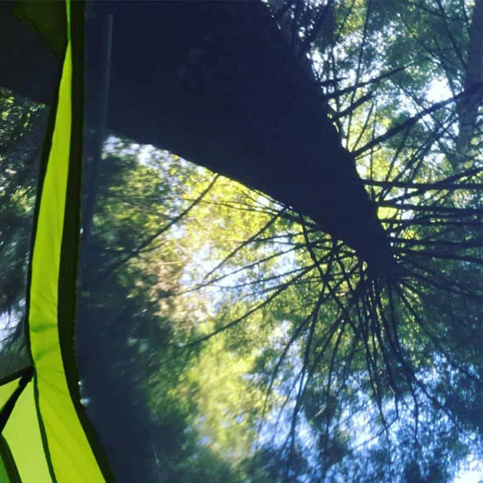Looking up into the trees from the mesh ceiling of your cozy tent.