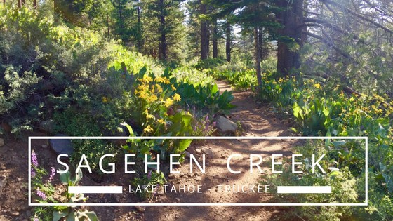 Sagehen Creek is a peaceful Truckee hike