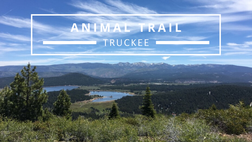 Climb up the Animal Trail in Truckee for incredible views of Prosser Dam.