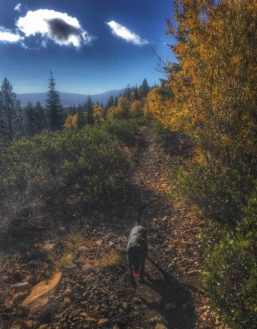 Dog on the Animal Trail