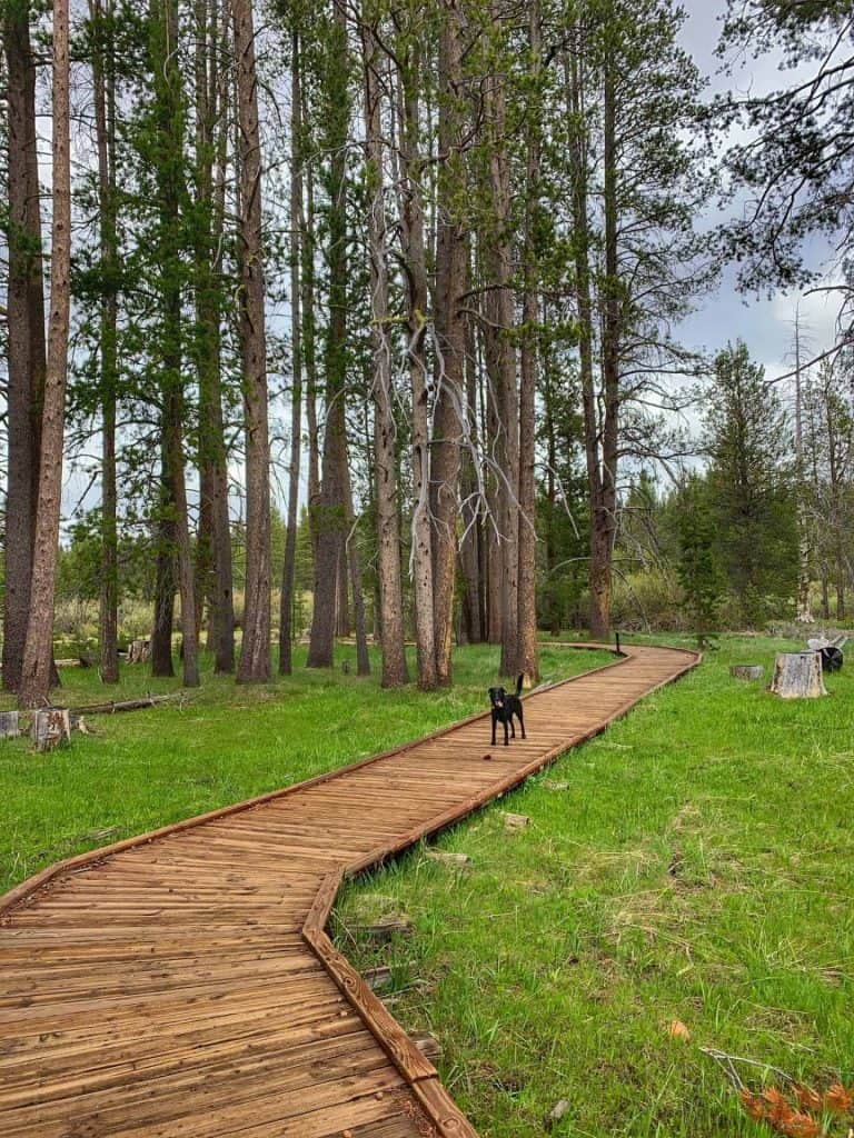 Dog on boardwalk of the interpretive loop of the Emigrant Trail