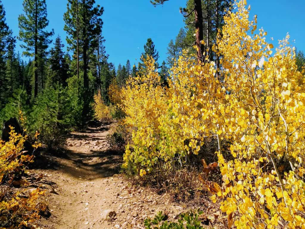 Experience the Tahoe National Forest in Truckee in the fall.